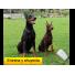 Repelente y Adiestrador Ultrasónico de Perros