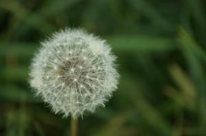 alergia a la primavera